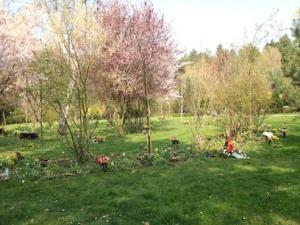Lebenslinie im Frühling. Südfriedhof Leipzig