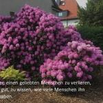 l_rhodedendron Bestattungen Dunker - Kondolenzbücher - Helko Hippe