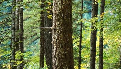 Waldbestattung / Baumbestattung